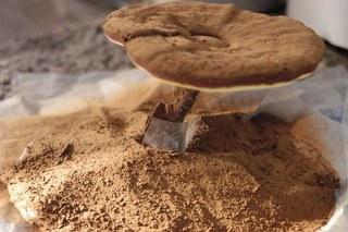 Spirit Poria mushroom