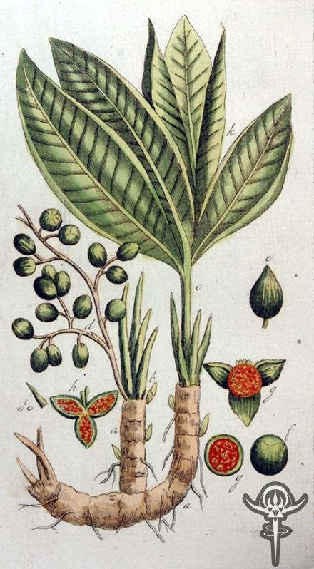 Grainsofparadisefruits